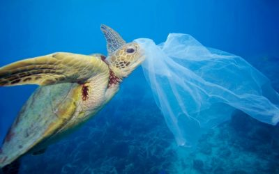 Approval of the Action plan for marine plastic waste management in the fisheries sector, 2020 -2030 period
